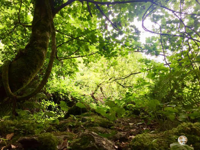 Bosques verdes en Parque Nacional de Killarney