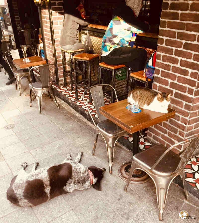 Gatas y perros conviviendo en Estambul